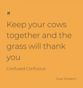 How the cows graze makes a difference to the grass
